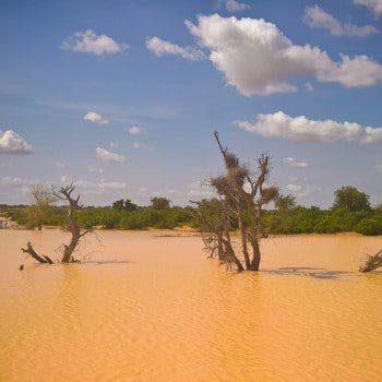 Valorisation-recherche-Sahel